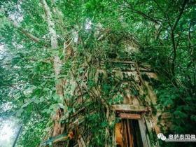 泰国灵验佛寺带你领略 鬼斧神工的树中的庙宇【泰国佛牌】